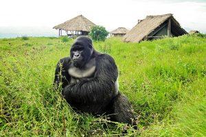 Hotel Stays Congo